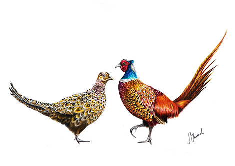 A Pheasant Exchange Signed Print
