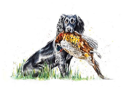 Cocker Spaniel and a Pheasant