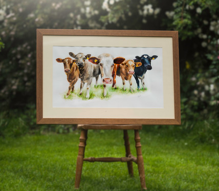 'Have You Herd?' For Sale