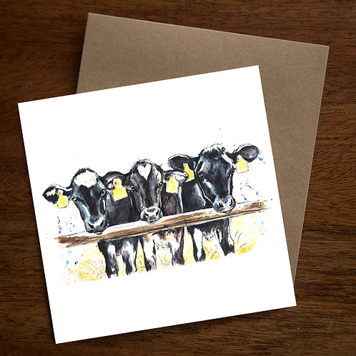 Dairy Calves Greetings card