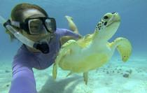 Snorkeling in the Virgin Islands.jpg