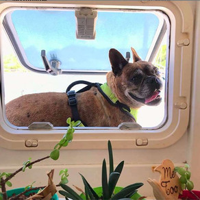 Some Crewed Yacht Charters Allow Pets On Board!