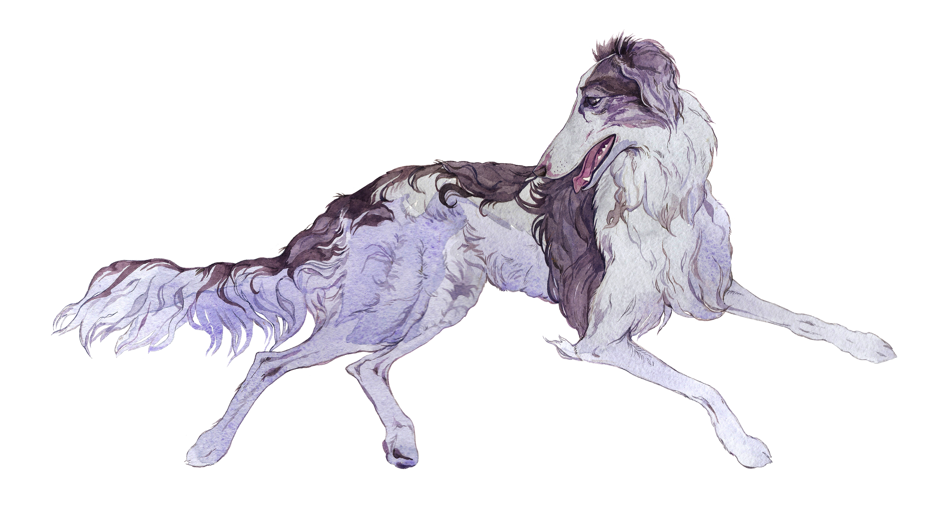 The Silky Windhound