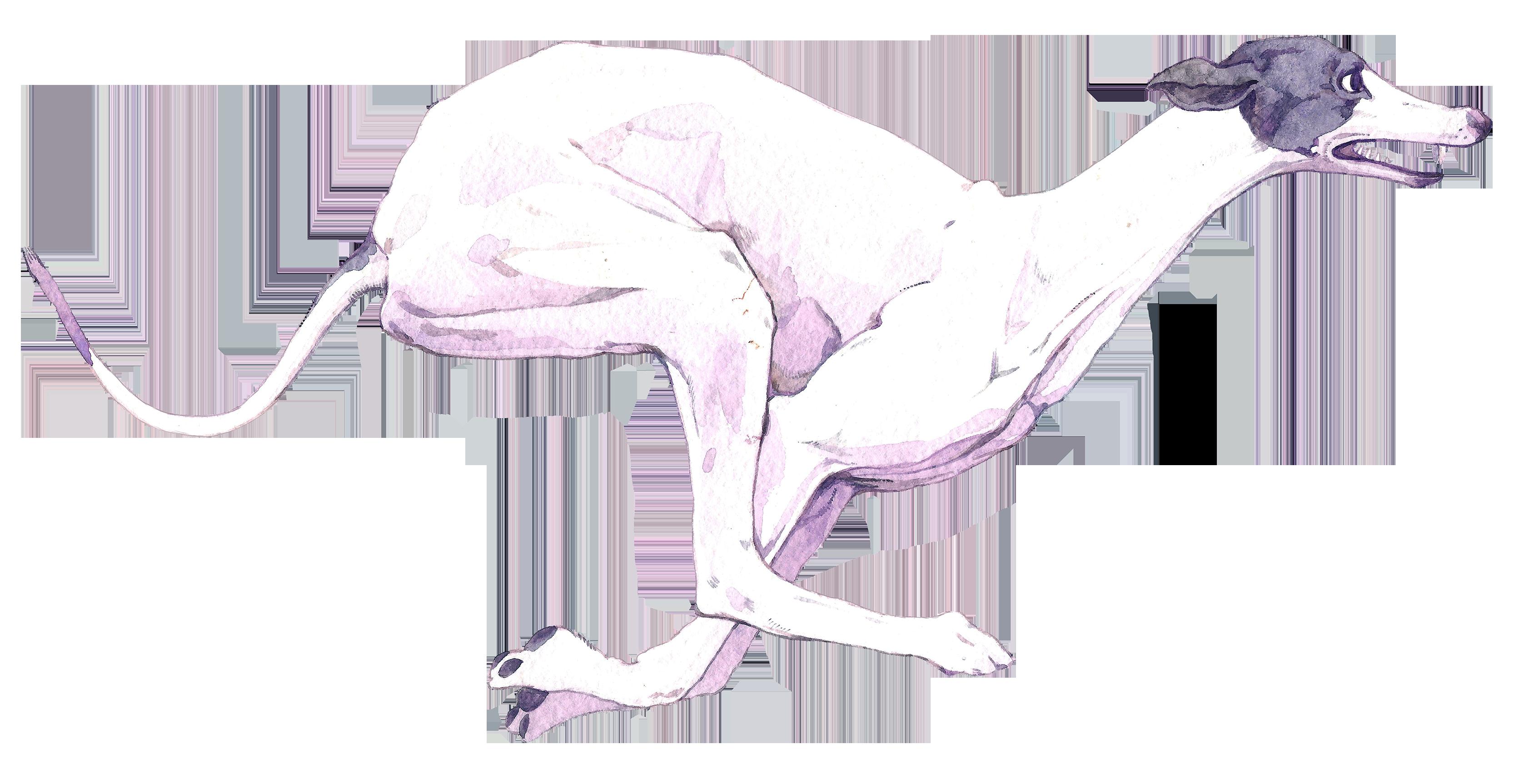 Dog ll