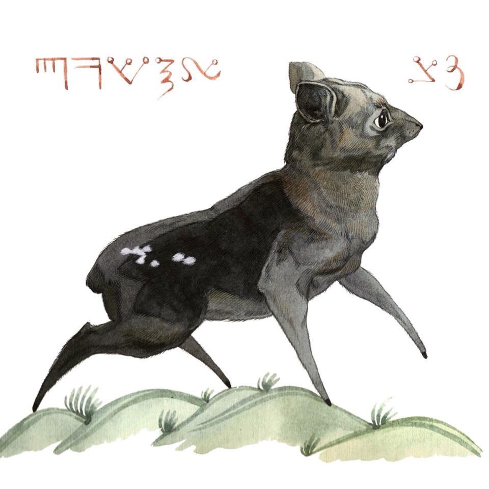 The Water Chevrotain