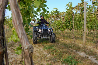 DRR USA's EV Safari in a vineyard
