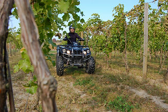 DRR USA EV Safari electric ATV in a vineyard
