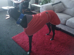 Pointy Faces Greyhound Collar Coat