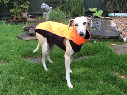 Lurcher Whippet Reflective Coat