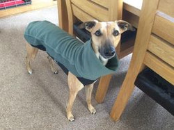 Whippet Fleece Jumper in Olive