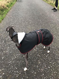 Whippet Coat Fleece Lined Black