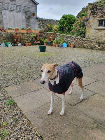 Whippet Raincoat