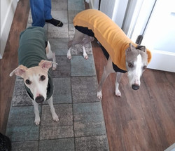 Whippet Fleece Jumper Pyjamas