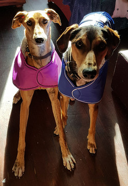 Pointy Faces Lurcher Winter Coats