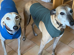 Under Vests for Lurchers and Greyhounds