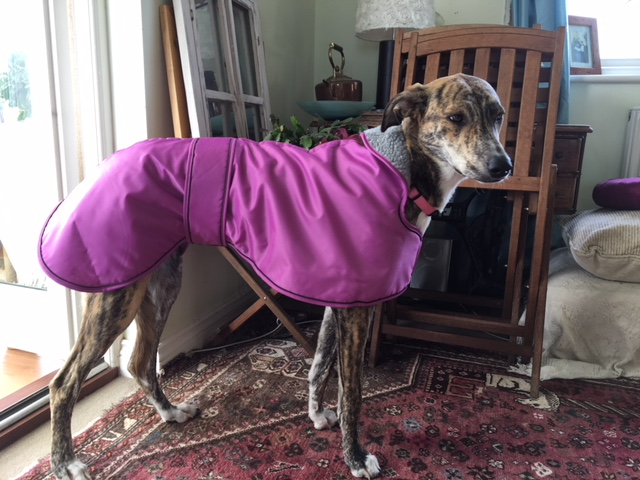 Lurcher Winter Coat Sighthound Pink