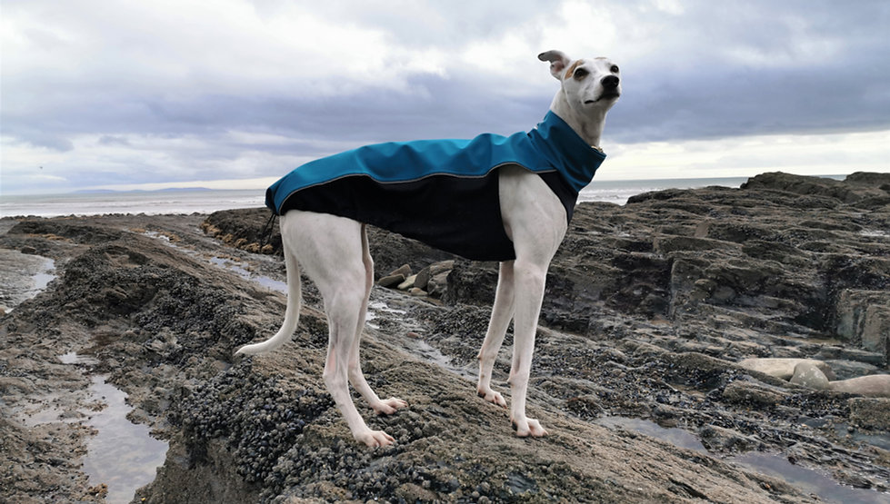 Lurcher Whippet Greyhound Coats