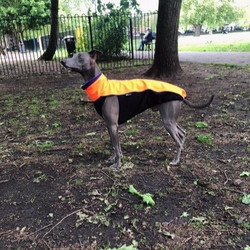 Whippet Soft shell Jacket in Neon Orange
