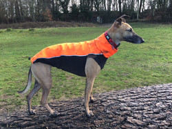 Whippet Coat High Vis
