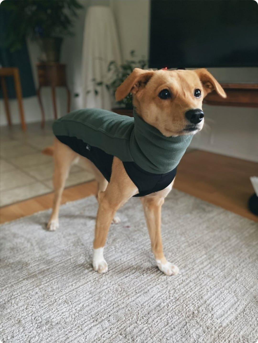 Sighthound Fleece Jumper in Olive