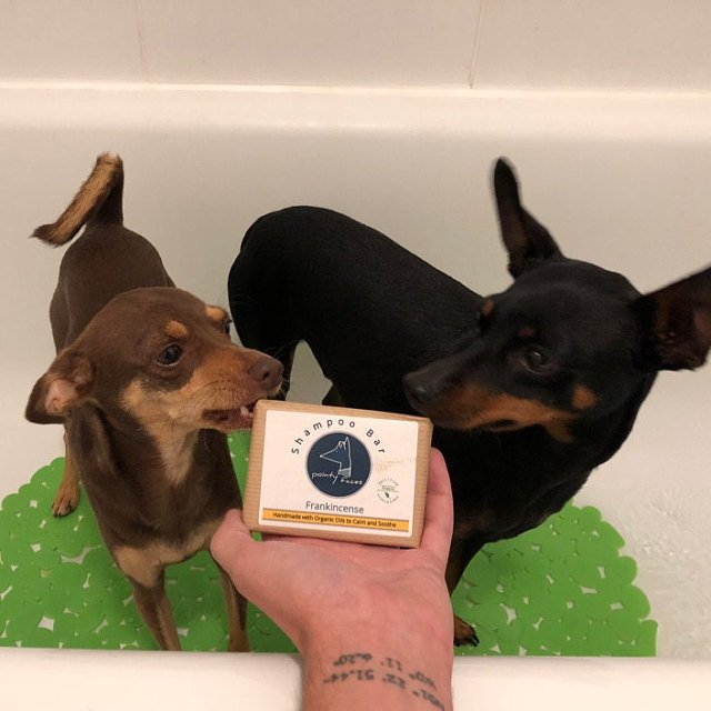 Organic Dog Shampoo Bar Pointy Faces