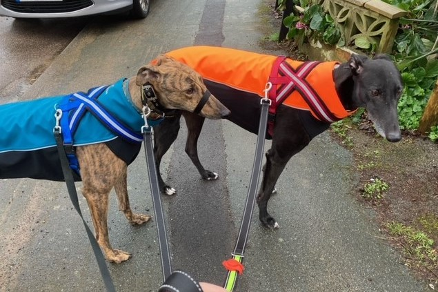 Greyhound Soft Shell Jackets