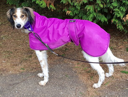 Saluki Winter Coat Pink / Cerise