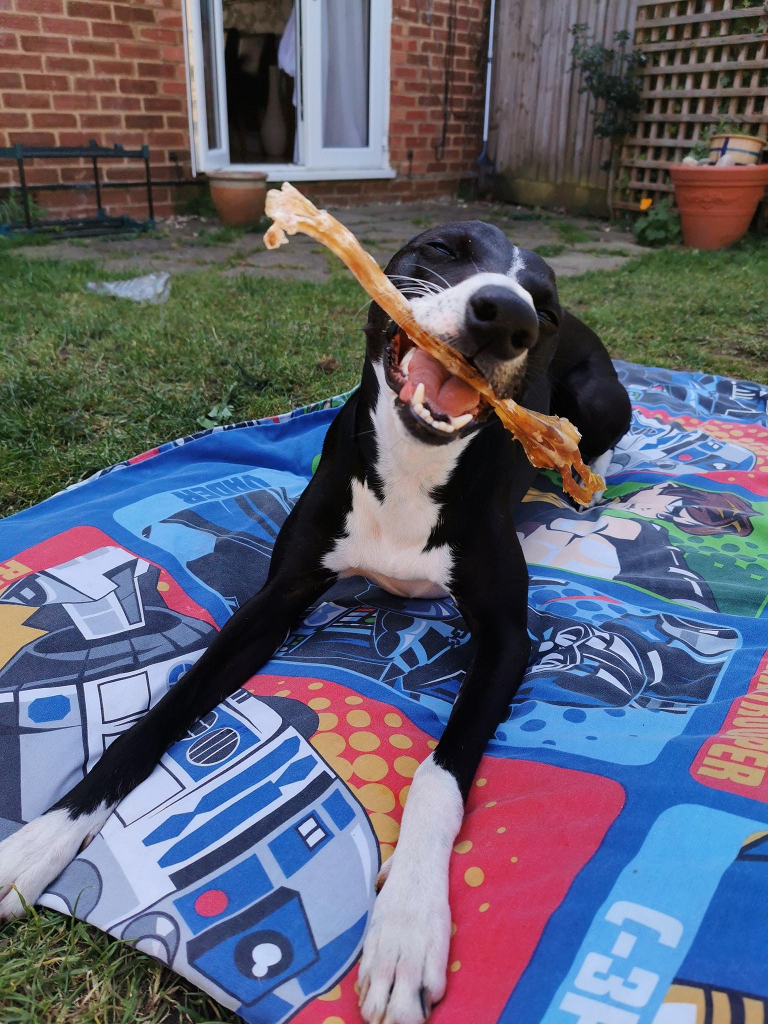 Natural Dog Chew Venison Tendon