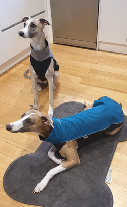 Whippet Rain Coat Jackets UK