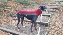 Pointy Faces Greyhound JUmper UK Red Dom