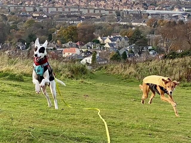 sighthound lurcher fleece jumper