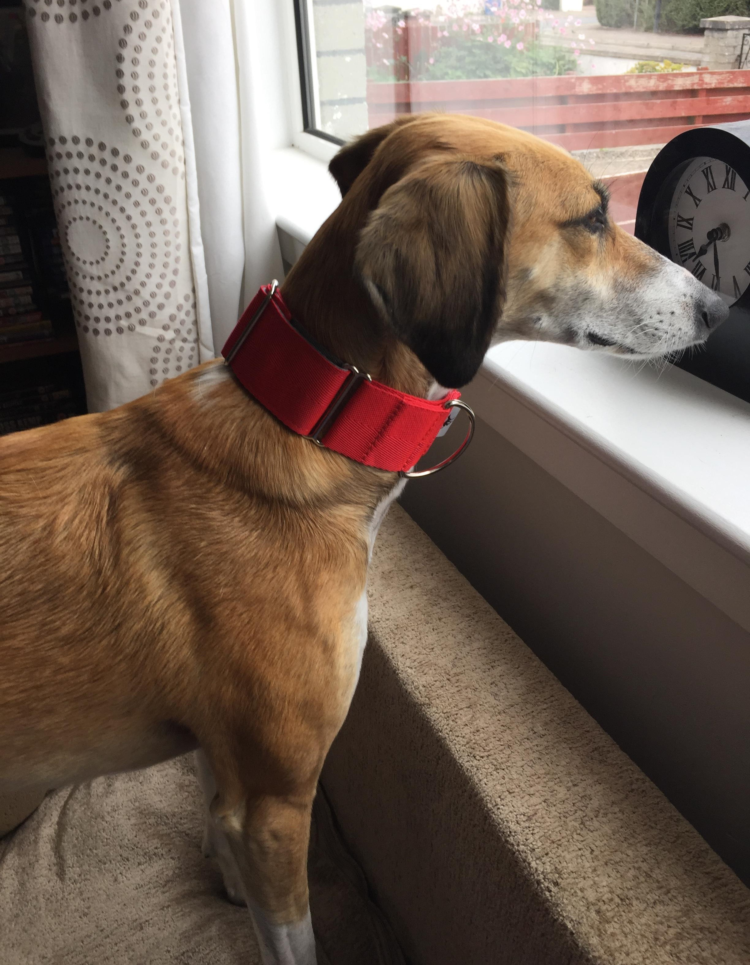 Pointy Faces Red Martingale Collar