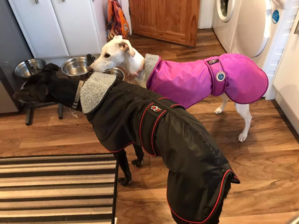 Greyhound Coats UK warm waterproof