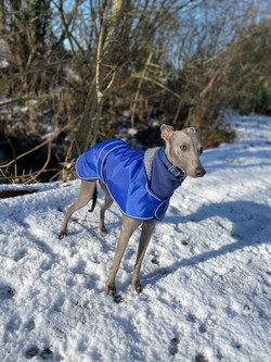 Whippet Coat and Fleece Jumper Blue