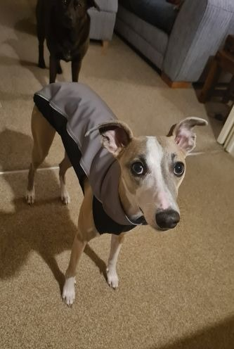 Whippet Soft Shell Jacket