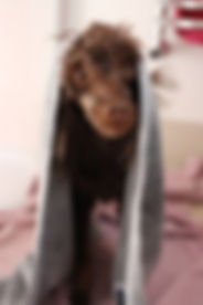 Pointy Faces Dog Towel