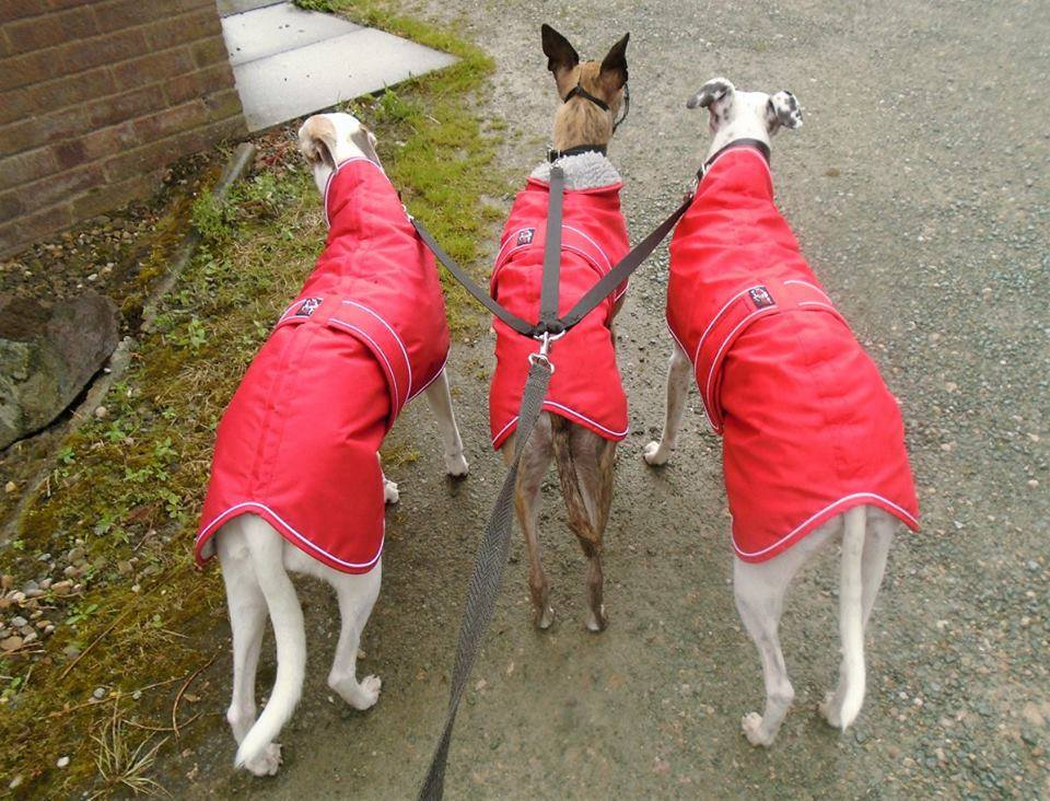 Pointy Faces Whippet Coats