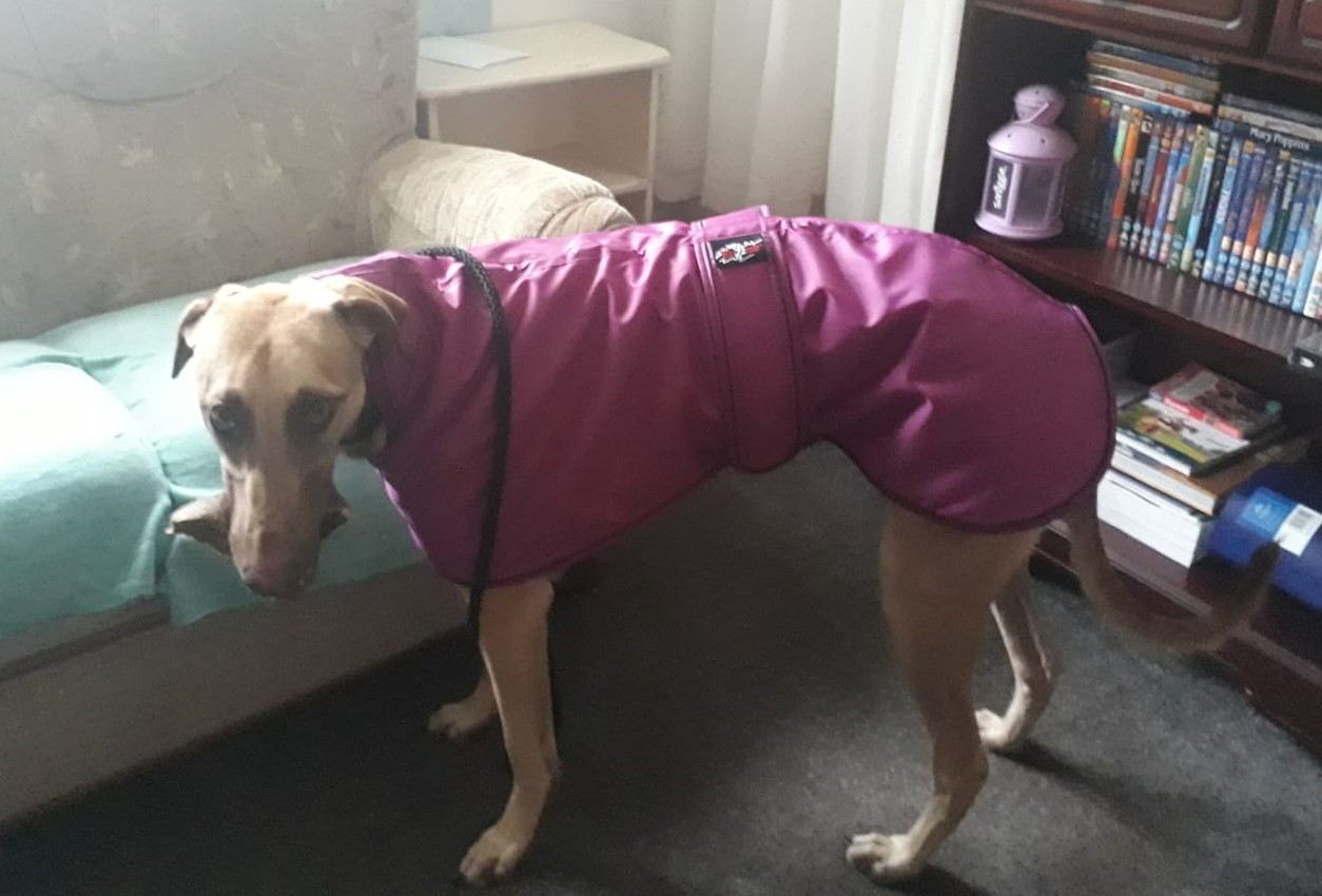 Pointy Faces Lurcher Coat Fleece
