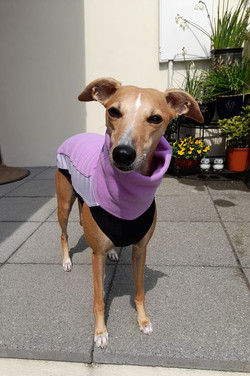 Whippet Fleece Jumper Lilac