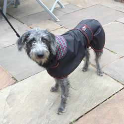 Lurcher Raincoat