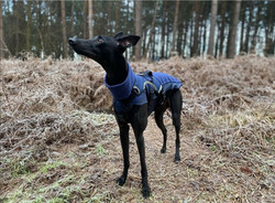 Whippet and Lurcher Fleece Jumper in Blue