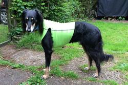 Sighthound Safety Vest in Neon Green