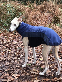 Pointy Faces Whippet Jumper Blue