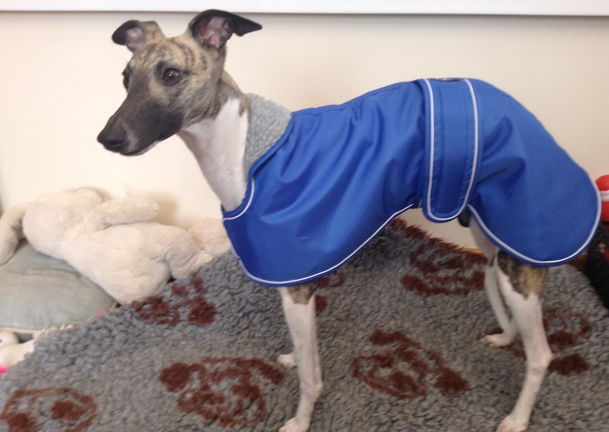 Whippet Winter Coat Blue Pointy Faces