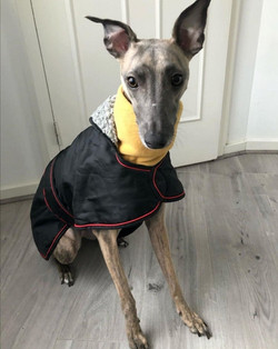 Whippet Coat and Jumper