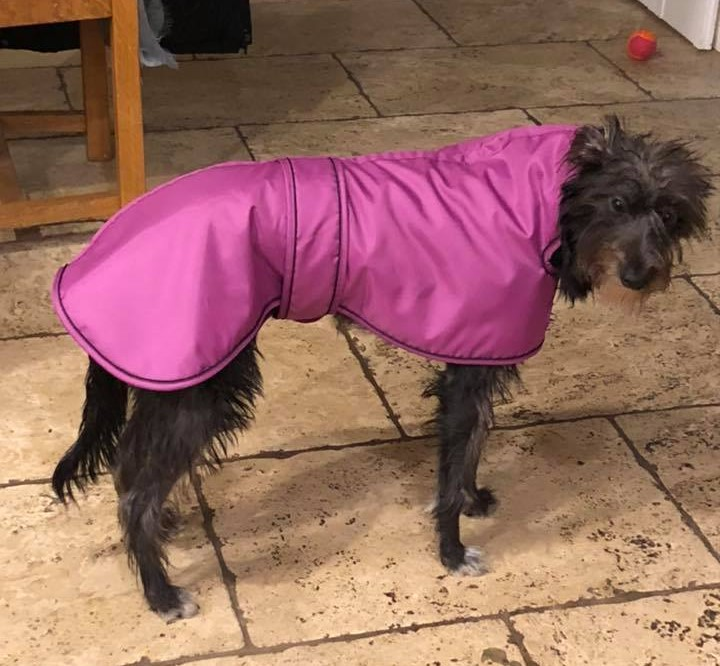 Winter Coats for Lurchers
