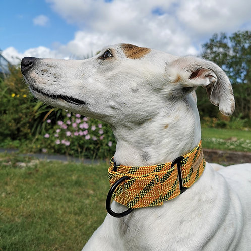 Pointy Faces Greyhound Whippet Lurcher Martingale Collar 1.5""