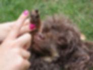 Pointy Faces Organic Dog Paw Balm