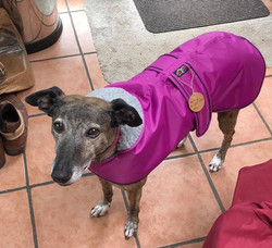 Pointy Faces lurcher winter coat cerise