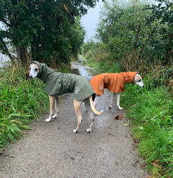 Whippet Raincoats with Snoods